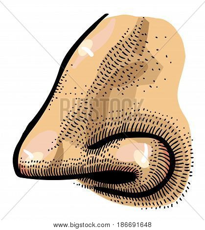 Cartoon image of human nose. An artistic freehand picture.