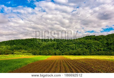 agricultural field in mountains. trees behind the grassy meadow. beautiful rural landscape at sunrise