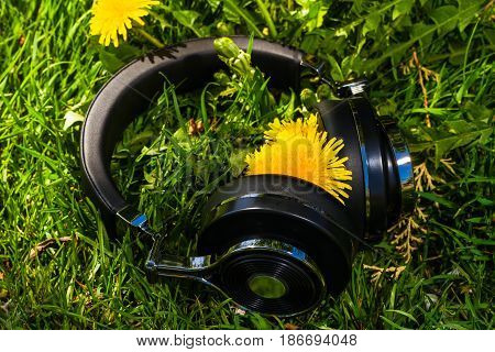 wireless travel headphones on lawn with dandelions