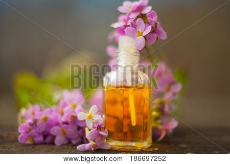 Essential Oil Of Arabis Flower On A Table In Beautiful Bottle