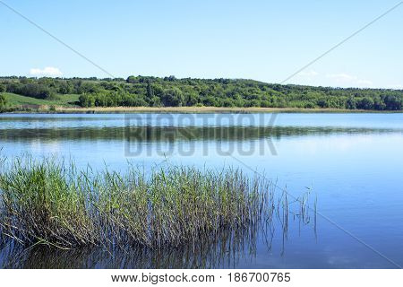 Bigger lake in the forest on a summer day