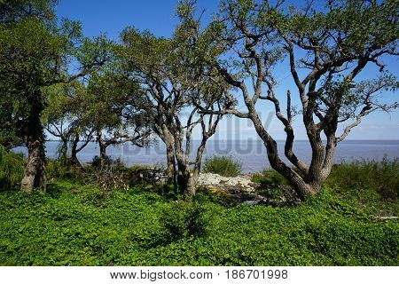 Green shrubbery and small trees in front of the ocean