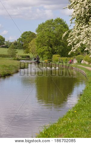 View along the 200 year old Shropshire Union canal on a summer afternoon in England United Kingdom
