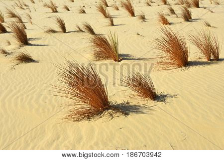 Sahara Desert, Grass In Sand, Egypt