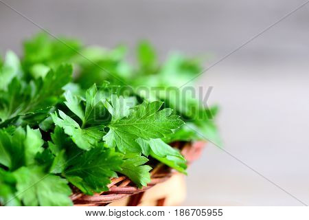 Fresh parsley leaves. Rich source of natural antioxidants, folic acid, vitamin K, vitamin C and vitamin A. Garden parsley herbs. Rustic style. Closeup