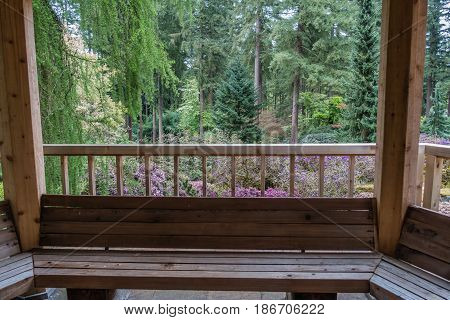 A view of a Pacific Northwest forest from a porch with a woodend bench.