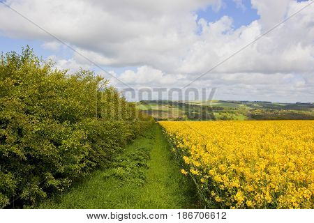Oilseed Rape And Patchwork Fields