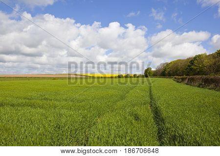 Wheatfields In Springtime