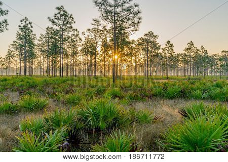 The Triple N Ranch is a Wildlife Management Area in Central Florida