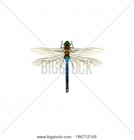 Realistic Dragonfly Element. Vector Illustration Of Realistic Damselfly Isolated On Clean Background. Can Be Used As Damselfly, Dragonfly And Insect Symbols.