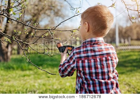 Little environmentalist. School child wearing plaid shirt doing maintenance work by pruning trees with secateurs