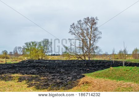 Blasted forest fire wasteland meadow on the bank of the river near the forest in the village