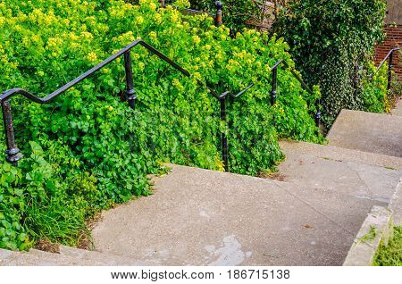 Descent On The Stone Stairs From The Hill In The Seacoast, Green Plants And Flowers On The Left