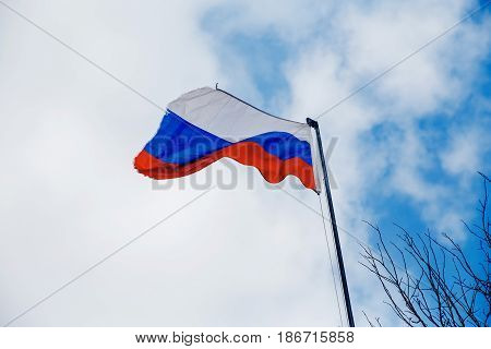 Flag of Russia battered torn develops against a blue sky with clouds. To the right is a frame of a tree branch.