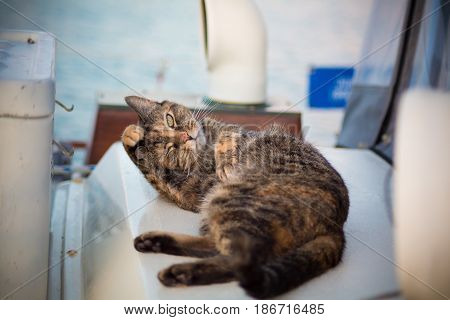 Happy kitty self bathing on sailboat deck