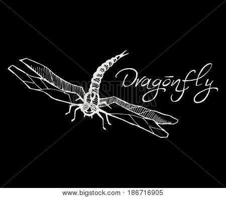 Hand drawn vector illustration of a dragonfly isolated sketch style. Flying dragonfly with transparent wings. Insect white on a black background.