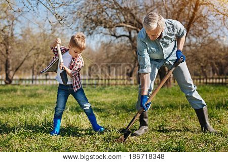 Familial ties. A senior gardener and his grandson outdoors spending free time together while planting new fruit trees in backyard