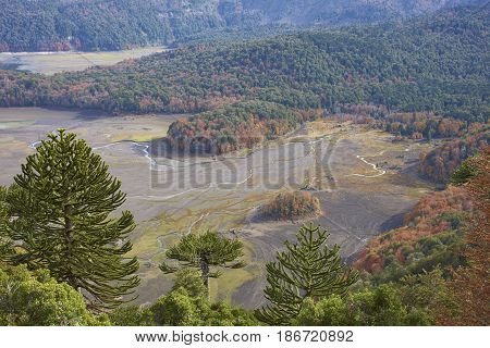 Conguillio National Park in southern Chile. Lake shore of Lago Conguillio surrounded by autumn trees.