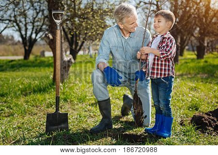 Family ties. Senior gardener teaching a grandkid how to look after a family garden by planting a new fruit tree in spring