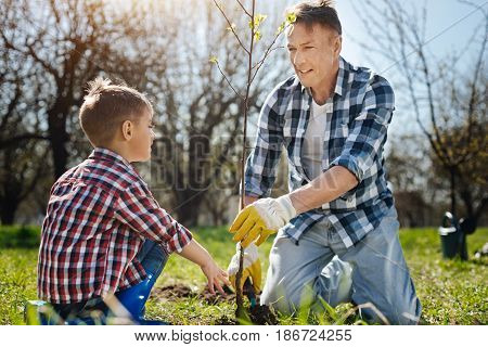 Little helper. Mature dad teaching little son how to take care of nature by setting a tree in a country house yard