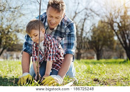 Teaching process. Cheerful father teaching his little son to take care of nature by planting a tree in a family garden