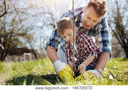 Teaching process. Father and son standing on knees while digging into the soil together and setting a fruit tree