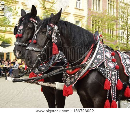 The horse costs on a cobblestone road of the old city. The horse is intended for transportation of tourists.