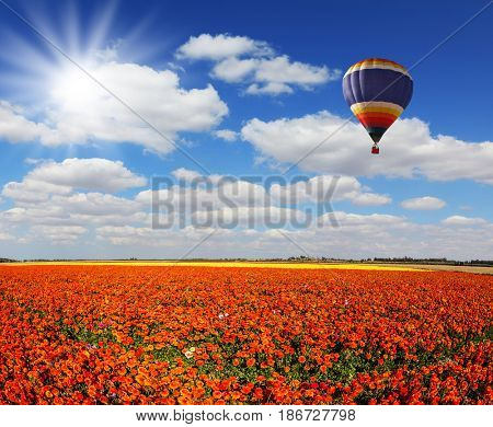 Concept of rural and extreme tourism. The bright spring sun and multi-color balloon over fields of red garden buttercups