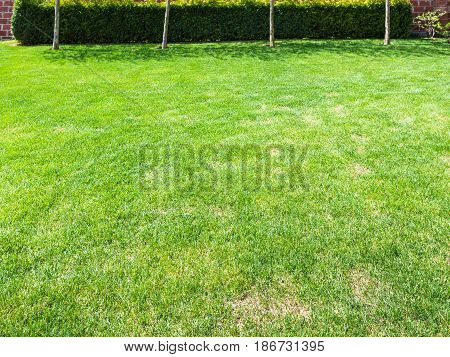 Clipped Lawn With Green Hedge On Backyard