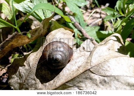 A snail and a dry plant on a rusty leaf in the forest a natural photo of a large glass