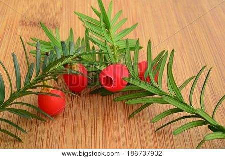Two green fresh yew twigs with ripe red berries on bamboo wooden chopping board close up view