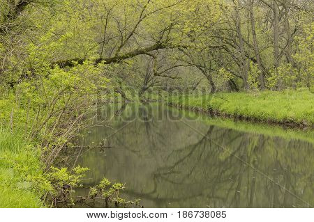 A creek in the woods during spring.