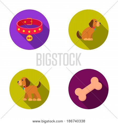 Bone, collar, sit, food.Dog set collection icons in flat style vector symbol stock illustration .