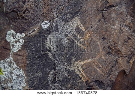 Petroglyphs ancient rock carvings on stones of Altai