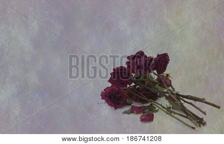 Love is dead - bunch of dried up dead withered red roses in bottom right corner on a rustic muted rough grey background with plenty of copy space