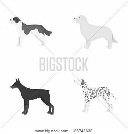 St. Bernard, retriever.doberman, labrador. Dog breeds set collection icons in monochrome style vector symbol stock illustration .
