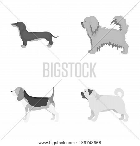 Pikinise, dachshund, pug, peggy. Dog breeds set collection icons in monochrome style vector symbol stock illustration .