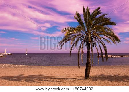 Palm tree. Beautiful sunset view. Mediterranean sea and yacht. Puerto Banus, Marbella city, Costa del Sol, Andalusia, Spain.