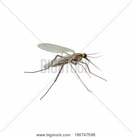 Mosquito isolated  illustration. Insect macro view