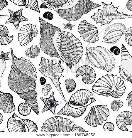 Seashell-background-circle-1