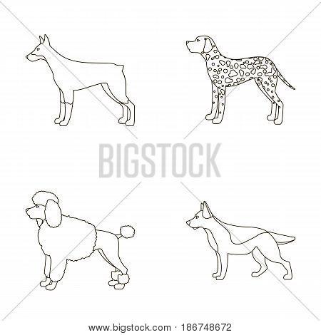 Poodle, doberman, dolmatin, german shepherd.Dog breeds set collection icons in outline style vector symbol stock illustration .