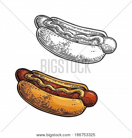 Hotdog. Isolated on white background. Vector color vintage engraving illustration for poster, menu, web, banner, info graphic