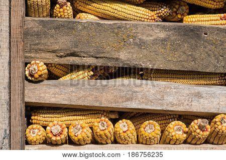Corn kernels between wooden boards of old grange