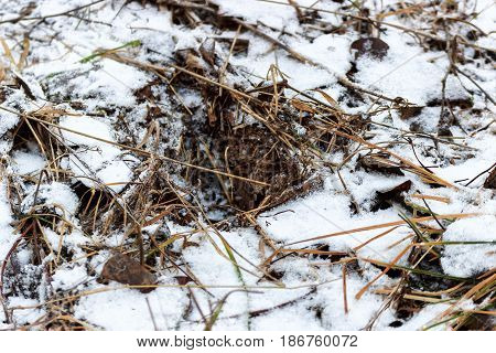 Beautiful background with grass covered with snow.