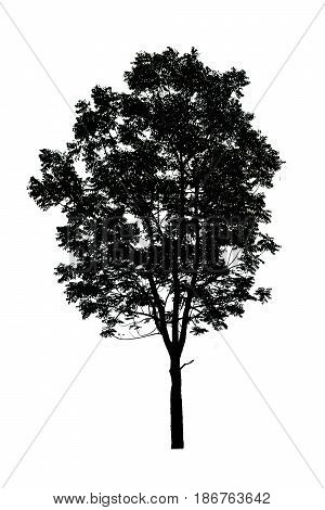 silhouette of tree isolated on white background