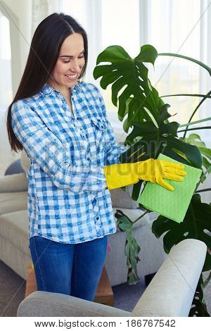 Mid shot of good-looking charwoman in gloves cleaning leaves of houseplant