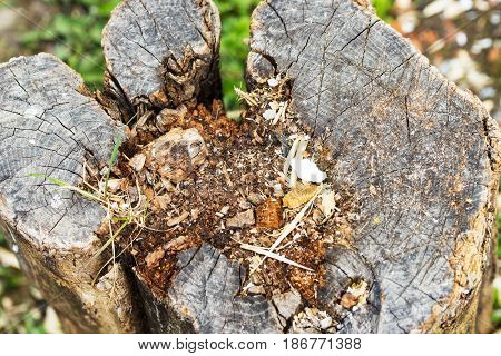Close up of old stump tree with scraps