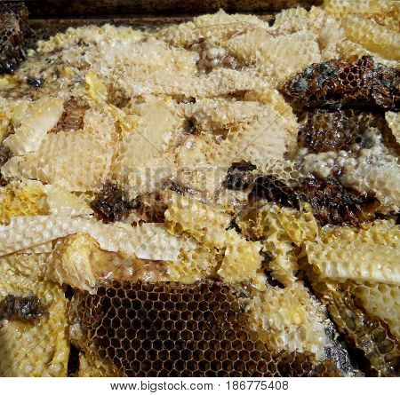The photo shows beehive honey nectar hive swarm winged bee honeycomb wax private apiary beekeeper beeswax.