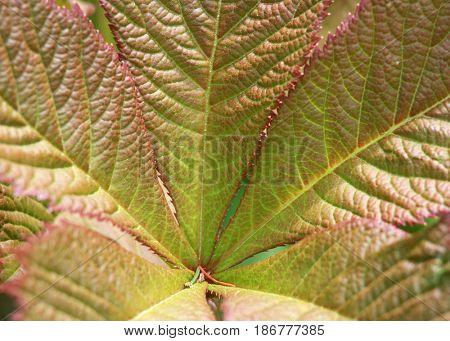 Extreme close up shot fresh plant leaves