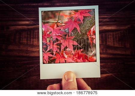Male Hand Holding Polaroid Photograph Of Red Maple Tree Leaves In Autumn With Copy Space. Travel Mem